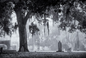 Fog Over Colonial Park - Mark Coggins Photography